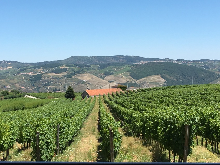 The view from our table of the vineyards